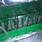 bottomshelving-greenhouse