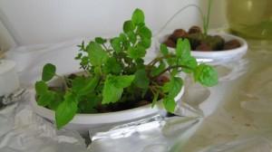 planting-series00_00-09-05-14-closeup4