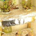 planting-series00_00-09-09-30